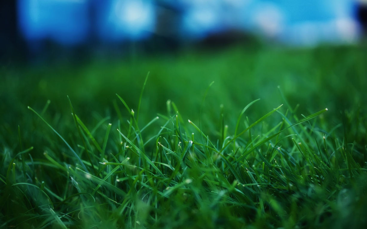 Green Wallpaper 043