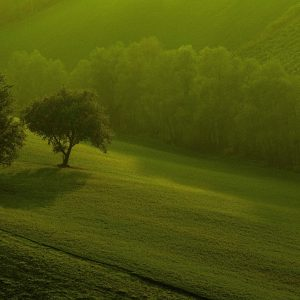 Green Wallpaper 048 300x300