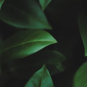 Green Wallpaper 051