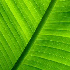Green Wallpaper 059