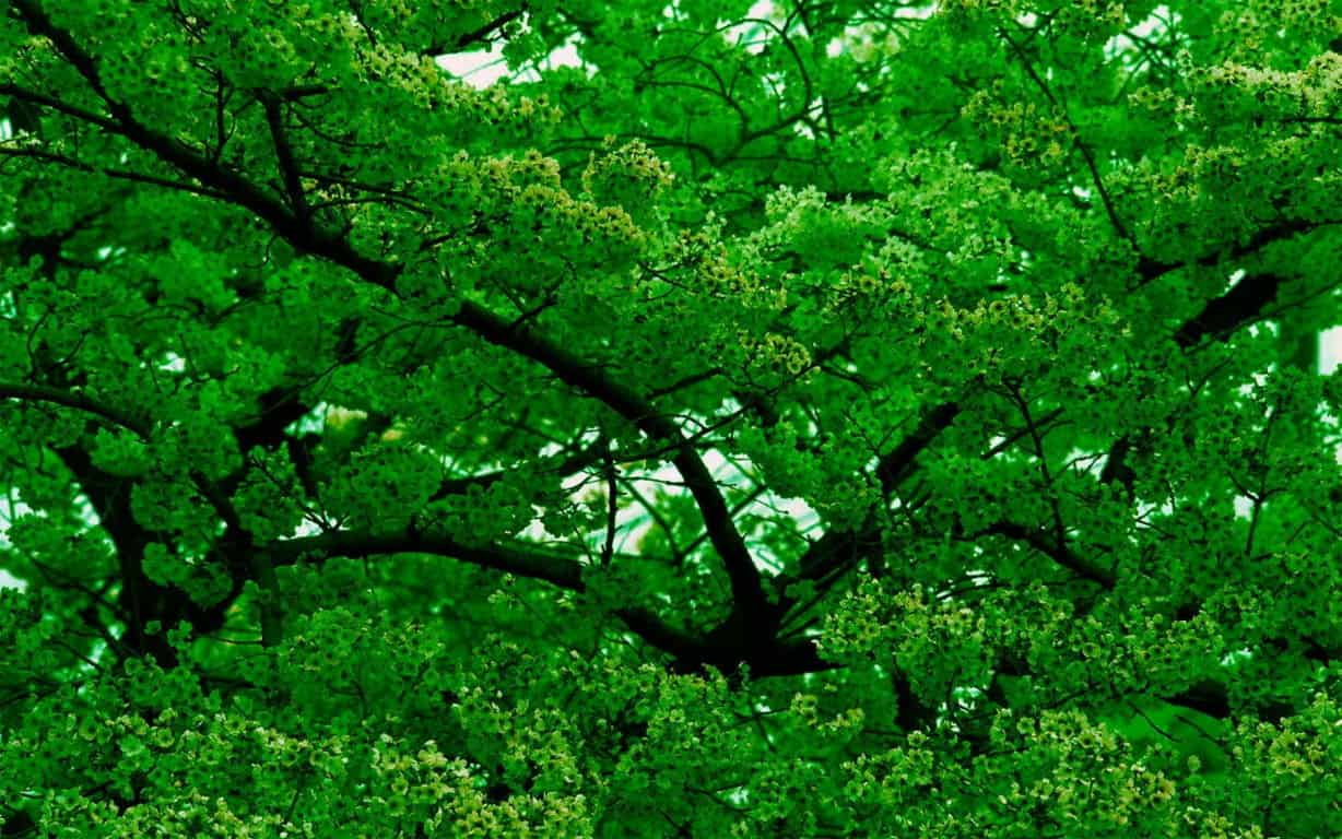 Green Wallpaper 062