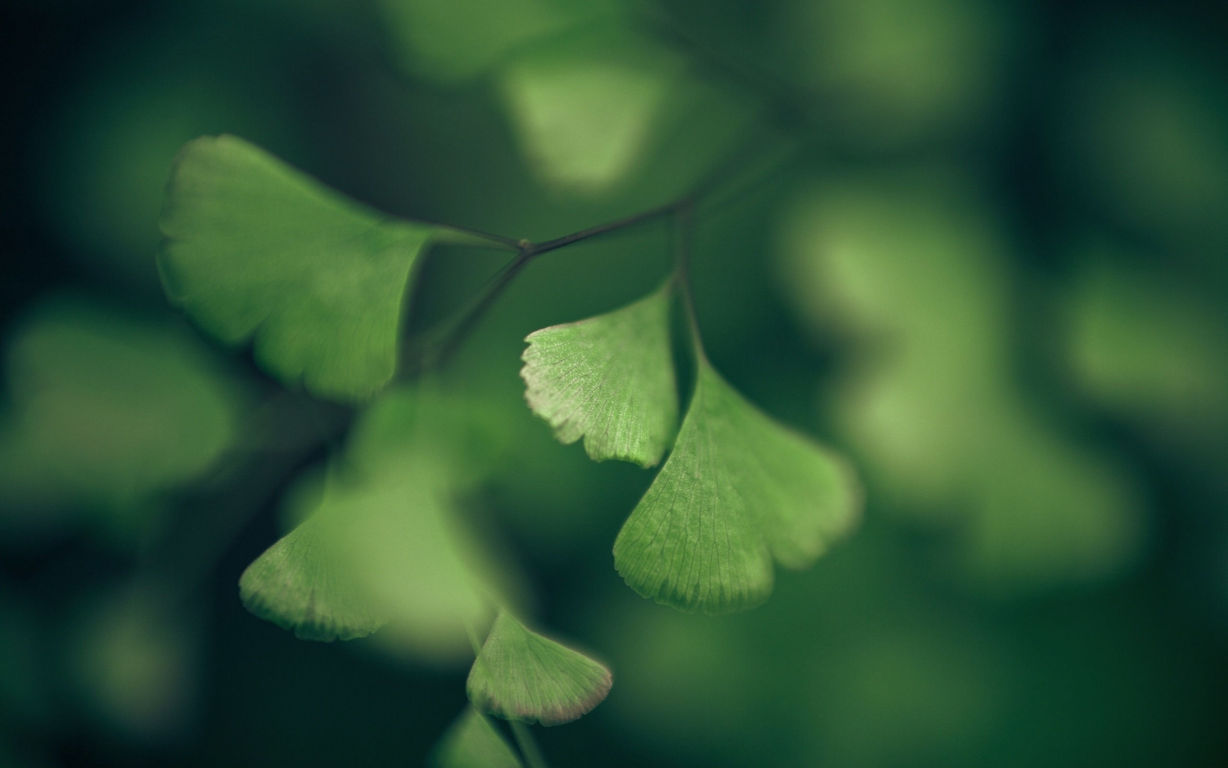 Green Wallpaper 063