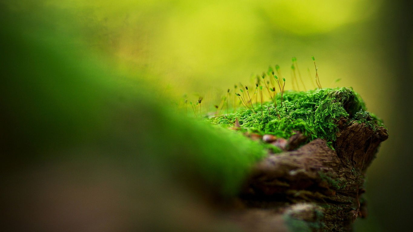 Green Wallpaper 078