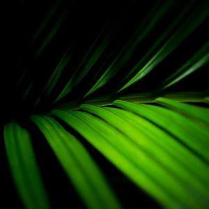 Green Wallpaper 081 300x300