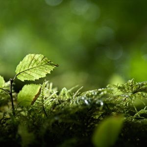 Green Wallpaper 086 300x300