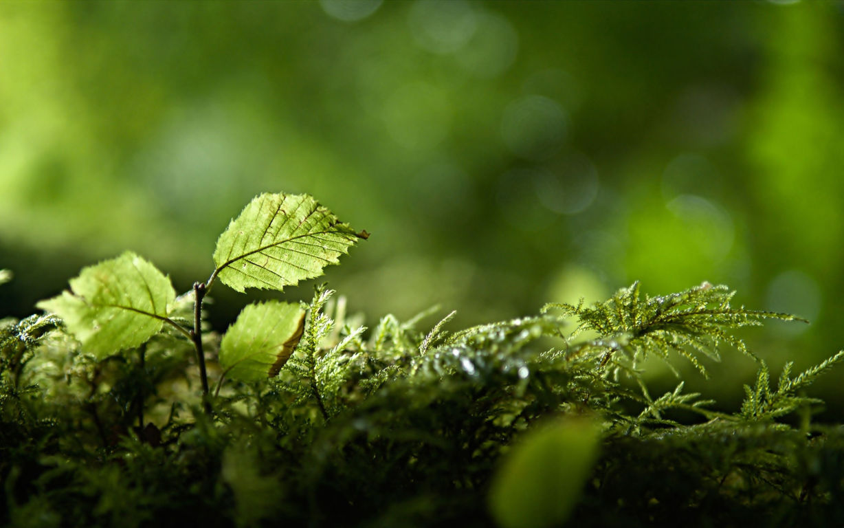 Green Wallpaper 086