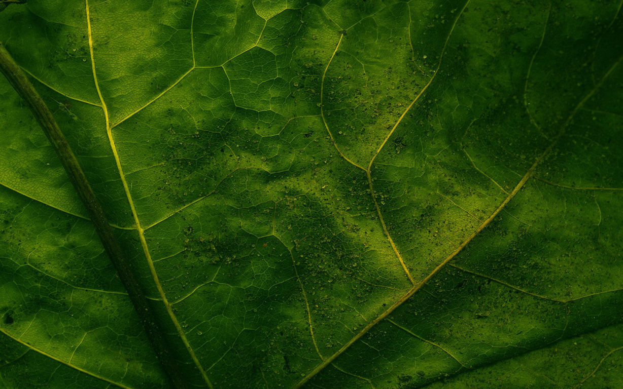 Green Wallpaper 094