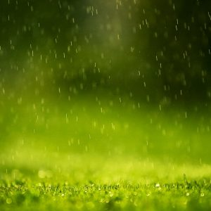 Green Wallpaper 099 300x300