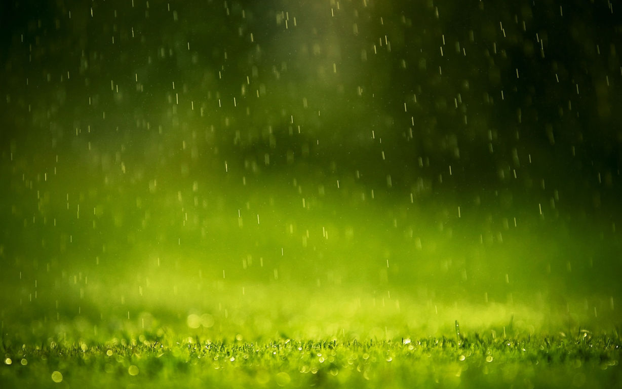 Green Wallpaper 099