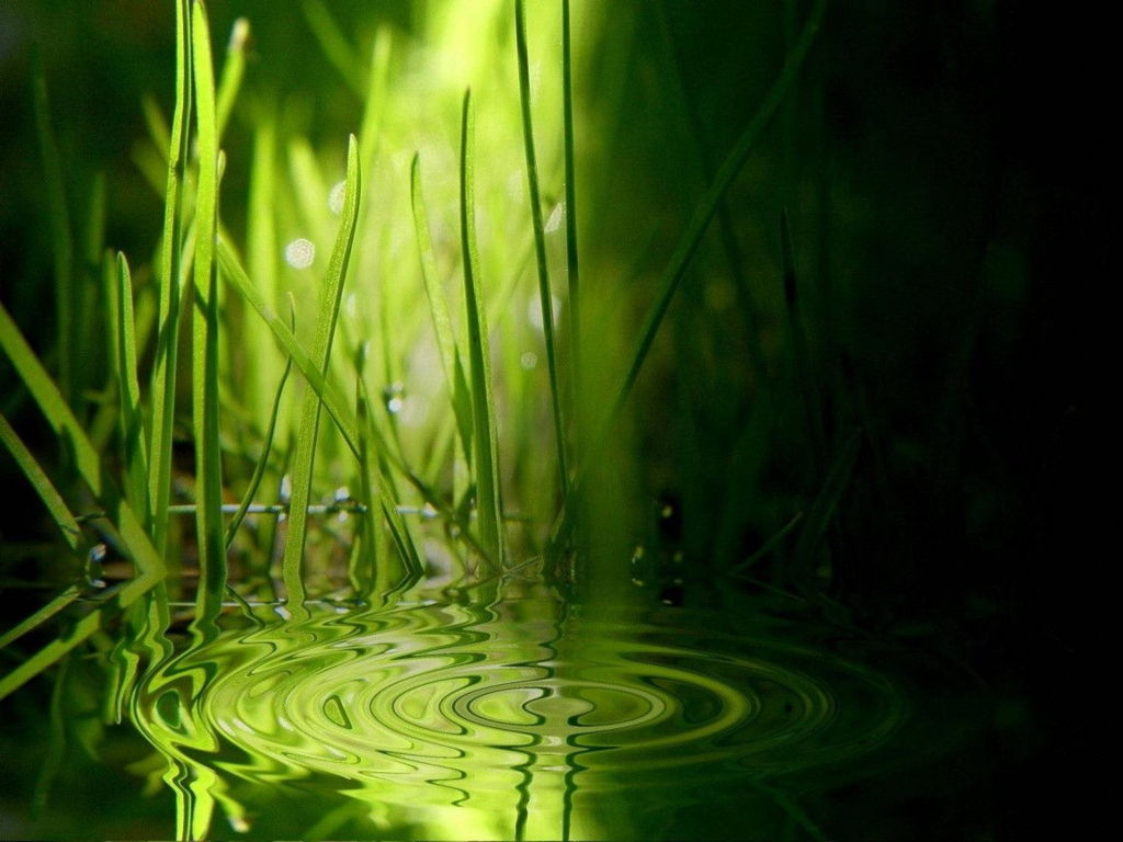 Green Wallpaper 104