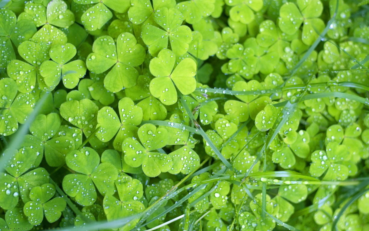 Green Wallpaper 112