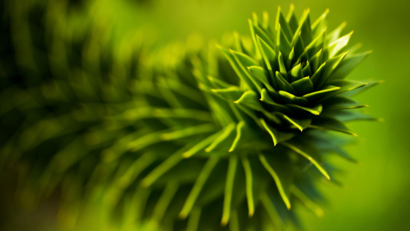 Green Wallpaper 119