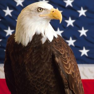 American Flag Eagle Wallpaper 009