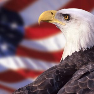 American Flag Eagle Wallpaper 010 300x300