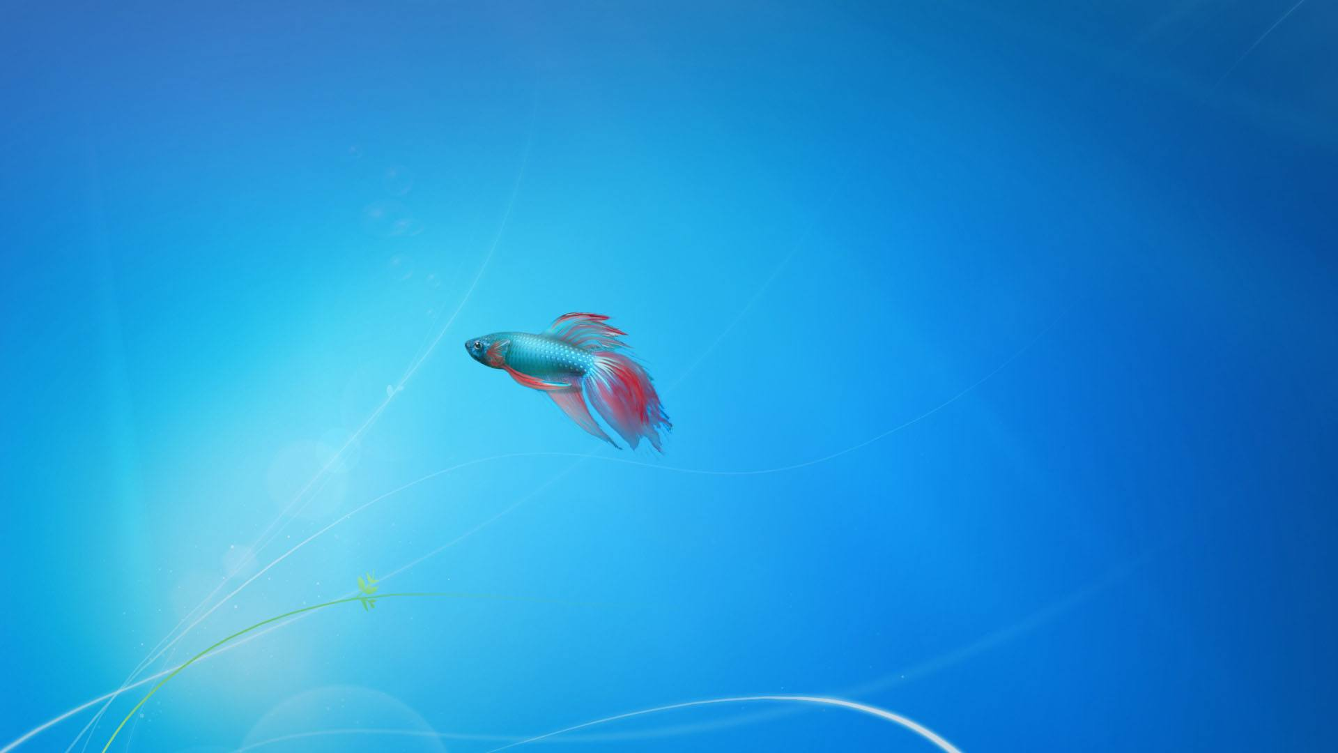 Fish Wallpaper 011