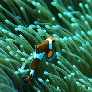 Fish Wallpaper 013 300x300