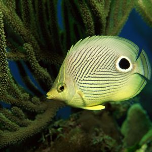 Fish Wallpaper 015 300x300