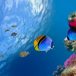 Fish Wallpaper 032