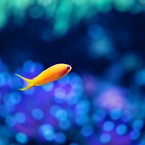 Fish Wallpaper 037 300x300
