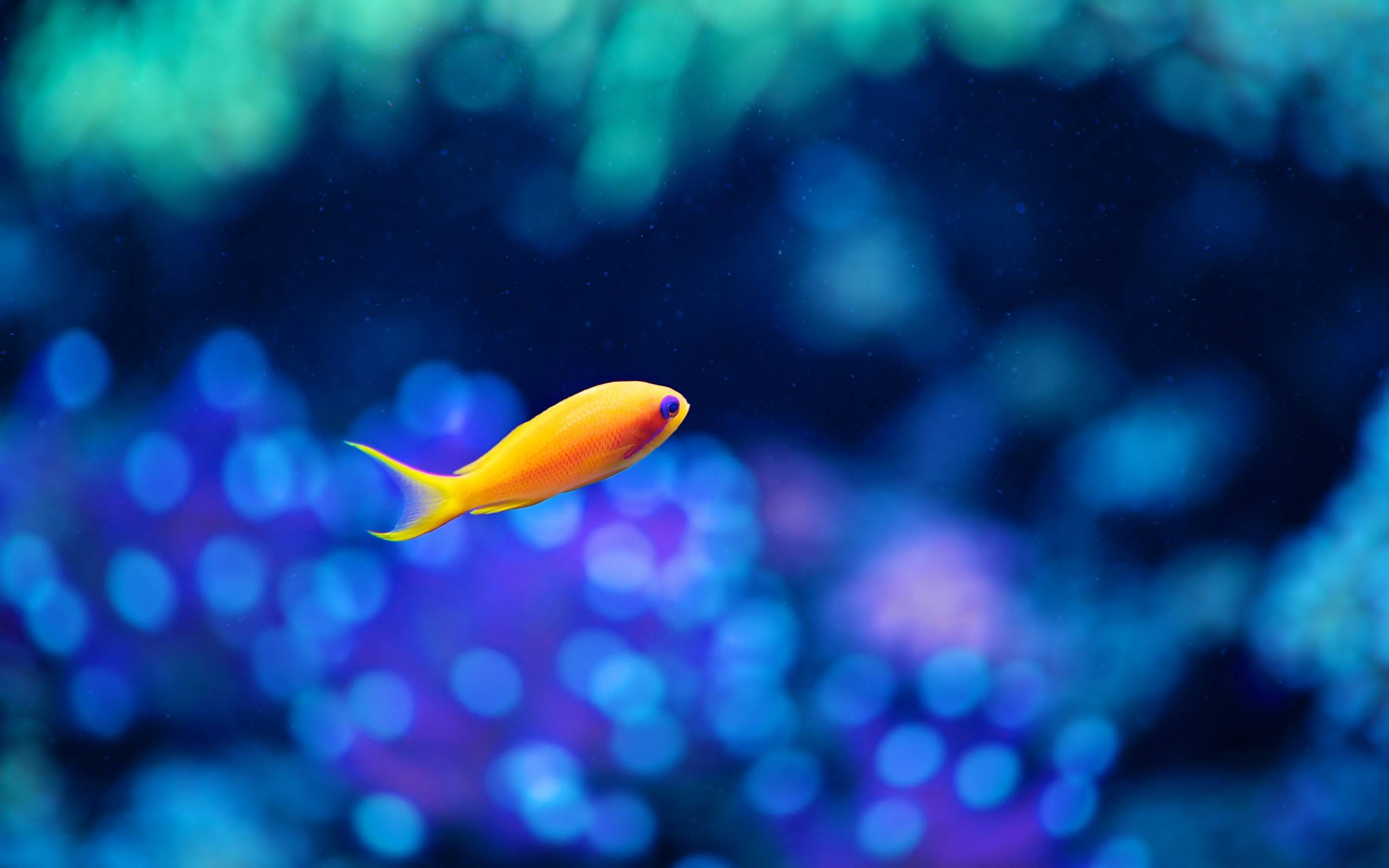 Fish Wallpaper 037