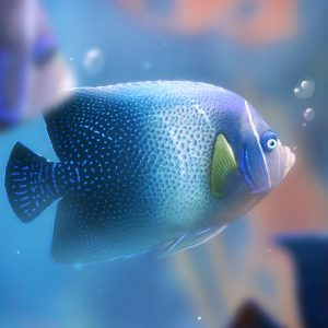 Fish Wallpaper 052 300x300