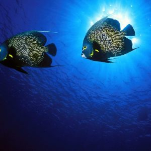 Fish Wallpaper 057 300x300