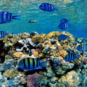 Fish Wallpaper 072 300x300
