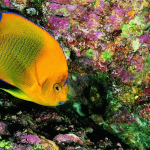 Fish Wallpaper 074 300x300