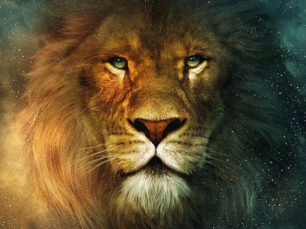 Lion Wallpaper 006