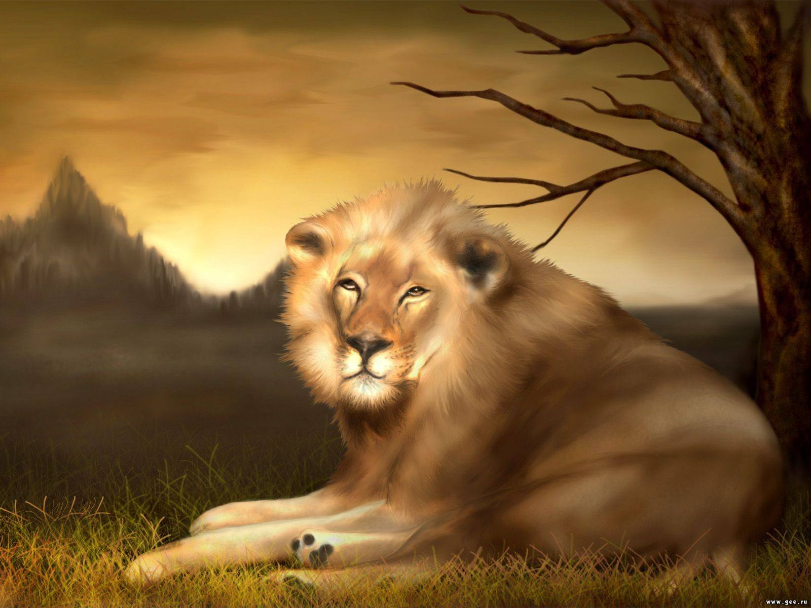Lion Wallpaper 034