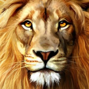 Lion Wallpaper 067
