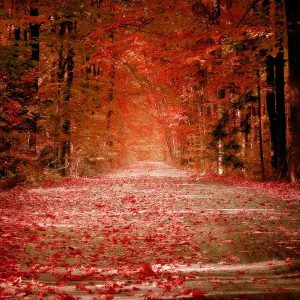 Autumn Wallpaper 005 300x300