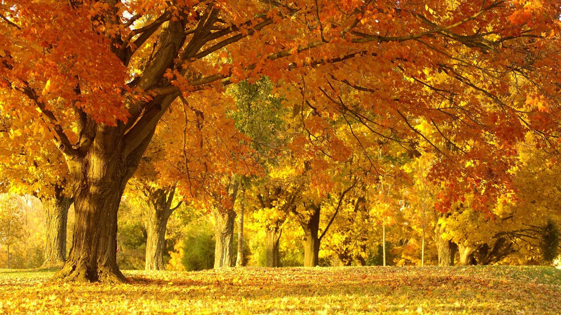 Autumn Wallpaper 012
