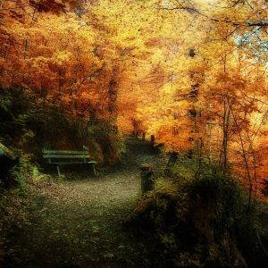 Autumn Wallpaper 028