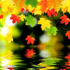 Autumn Wallpaper 030 300x300