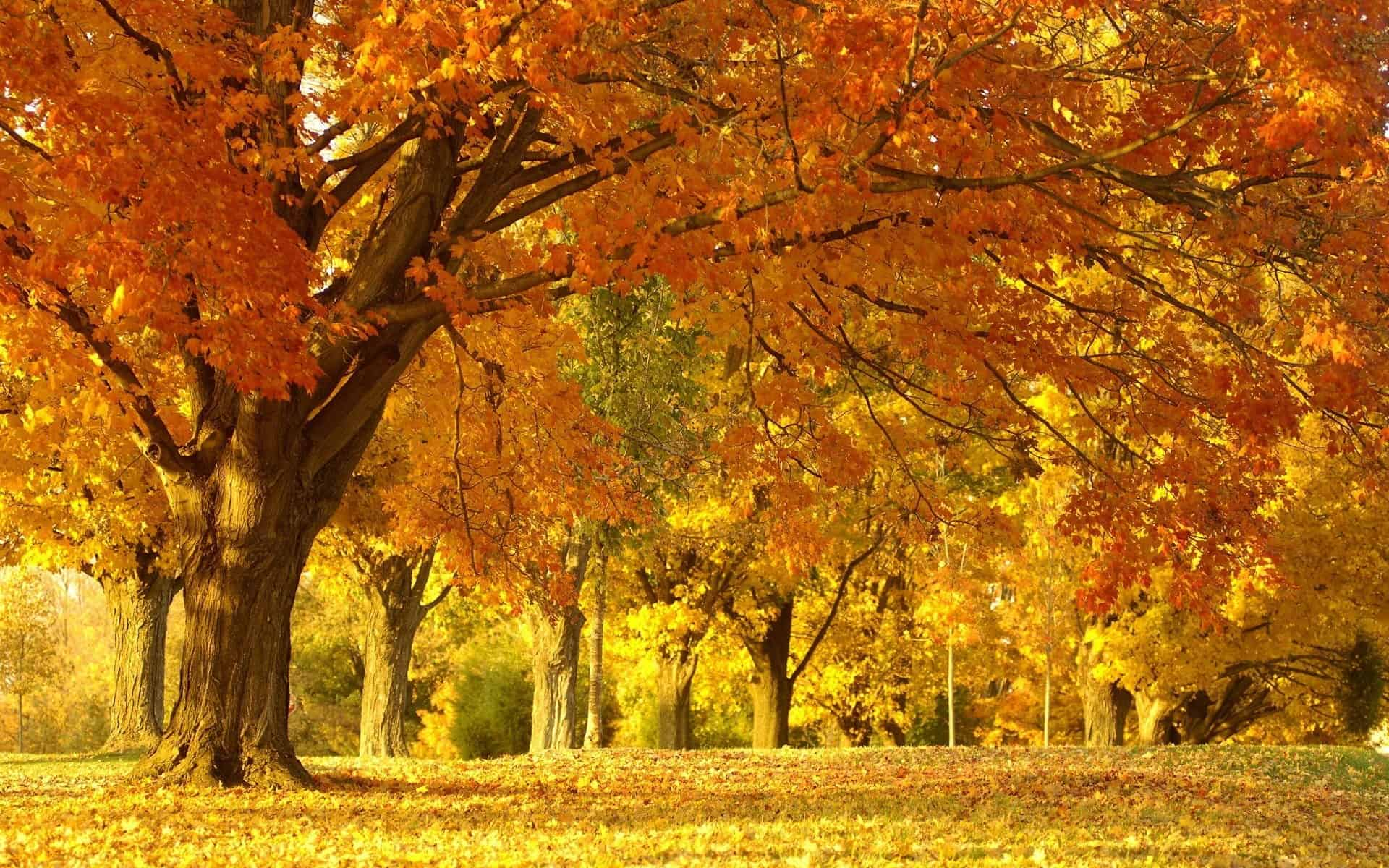 Autumn Wallpaper 041