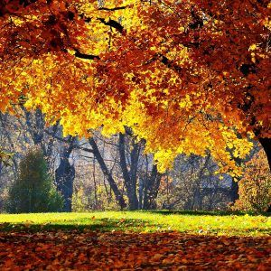 Autumn Wallpaper 053 300x300