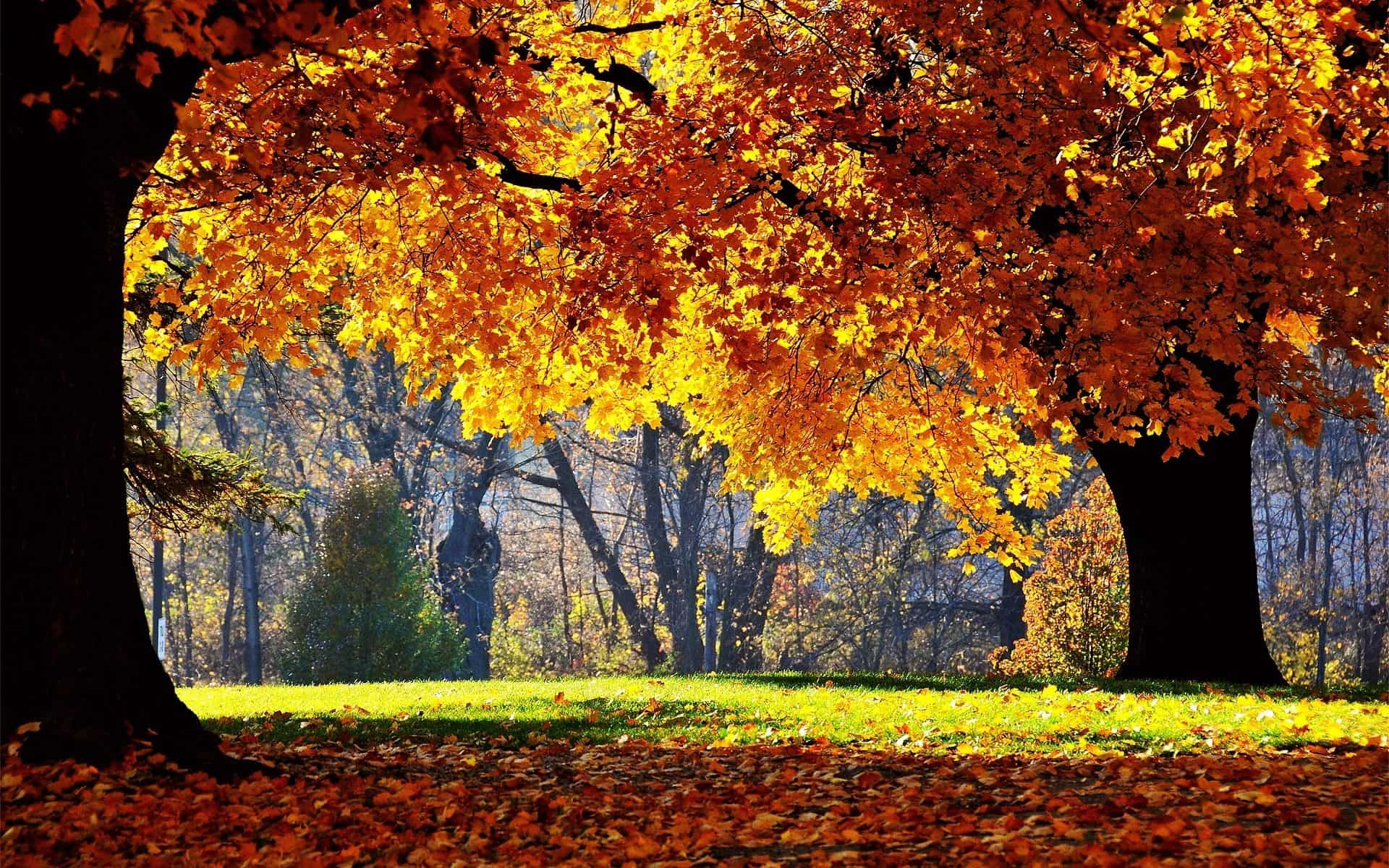 Autumn Wallpaper 053