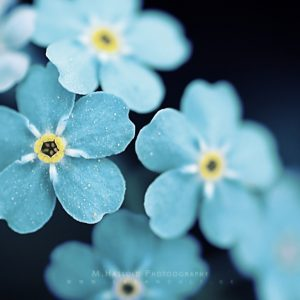 Flower Wallpaper 031