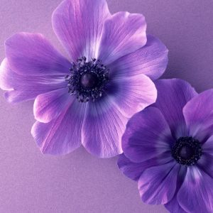 Flower Wallpaper 038