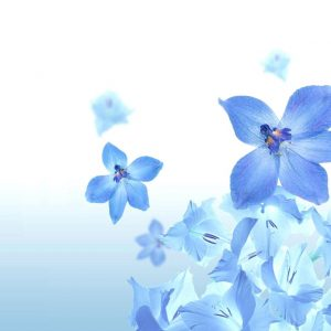 Flower Wallpaper 048