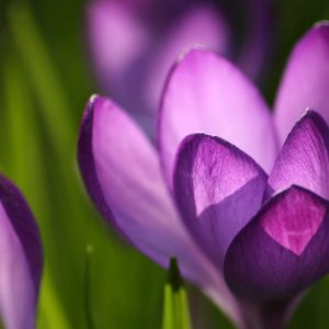 Spring Nature Wallpaper 013