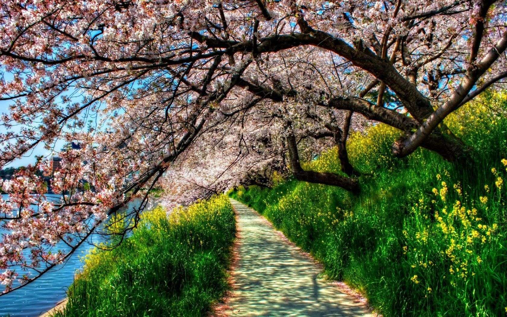 Spring Nature Wallpaper 017