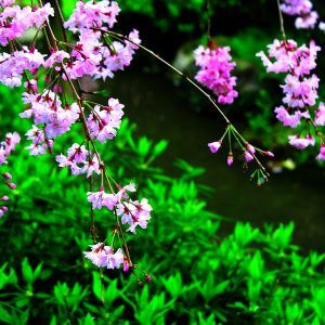 Spring Nature Wallpaper 032