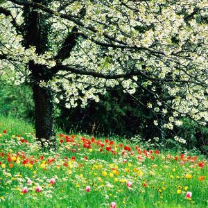 Spring Nature Wallpaper 040 300x300