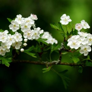 Spring Nature Wallpaper 047