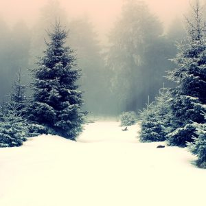 Winter Wallpaper 002 300x300