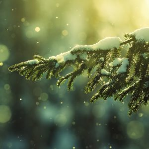 Winter Wallpaper 003 300x300
