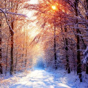 Winter Wallpaper 018 300x300