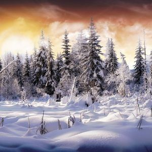 Winter Wallpaper 027 300x300